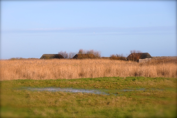 Hides, Cley Marshes, 2013 Photo: Hanne Siebers