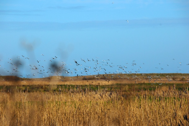Cley Marshes, 2013 Photo: Hanne Siebers