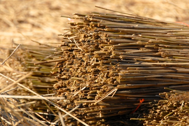 Bundle of reed, Cley next the Sea, 2013 Photo: Hanne Siebers