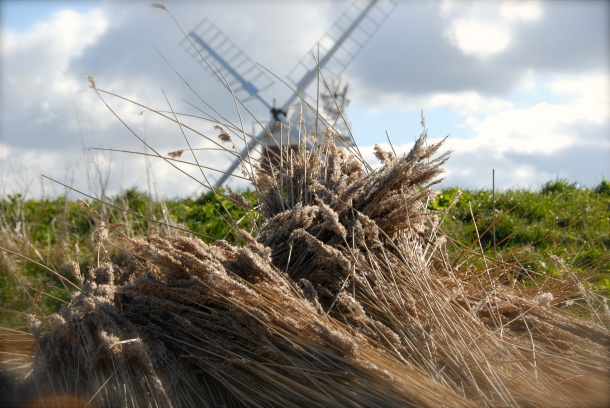 Cley Mill, 2013 Photo: Hanne Siebers